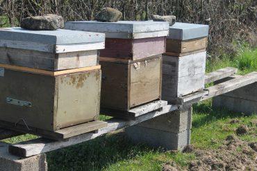 Nos ruches aux Nugues