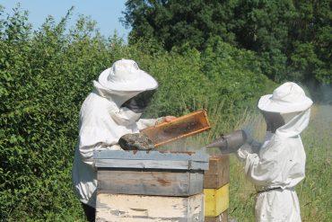 Esther et l'apiculteur.